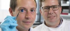 Dr. Steve Swioklo and Professor Che Connon with a dyed cornea