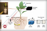 A Diagram Showing How Spinach can be Altered to Detect Explosives